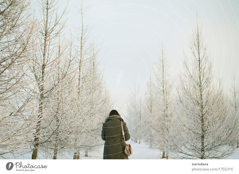 Winterreich Silvester u. Neujahr Rücken 1 Mensch Umwelt Natur Pflanze Luft Himmel Klima Eis Frost Schnee Schneefall Baum Wildpflanze Fichte Fichtenwald Wald