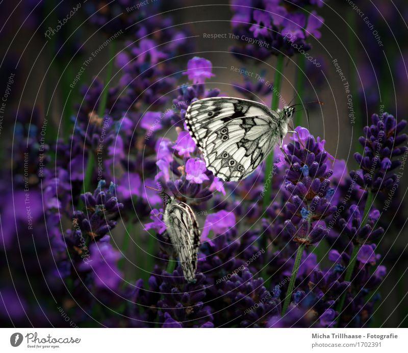Schmetterlinge & Blumen Natur Pflanze Sommer weiß Tier Blüte Wiese natürlich klein Garten fliegen Wildtier sitzen Flügel Blühend