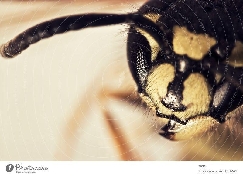 .Wunderwerk der Evolution Natur Tier gelb Umwelt Auge Traurigkeit Tod Beine fliegen Flügel Schutz Trauer Tiergesicht Insekt Biologie fangen