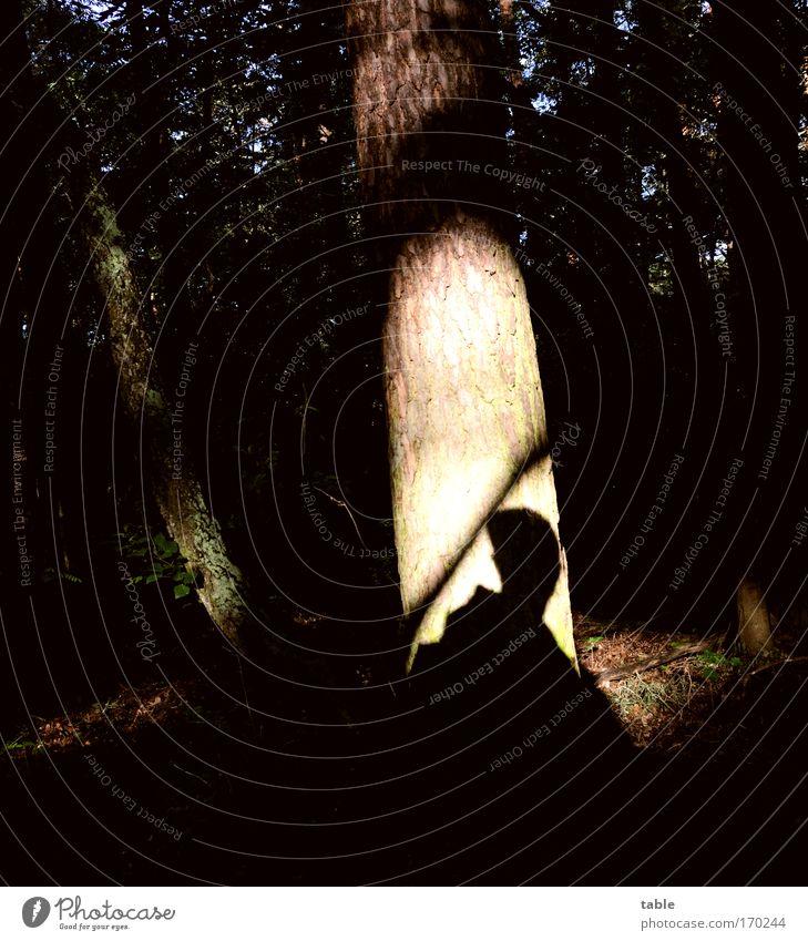 Einer kommt... Mensch Mann Natur Baum grün blau ruhig schwarz Einsamkeit Wald dunkel Erholung Gefühle braun Angst Erwachsene