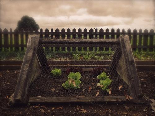 kriegsenkel | überleben Himmel Natur Pflanze Landschaft Einsamkeit dunkel Herbst Garten Stimmung braun Feld Erde bedrohlich Urelemente Schutz Sicherheit