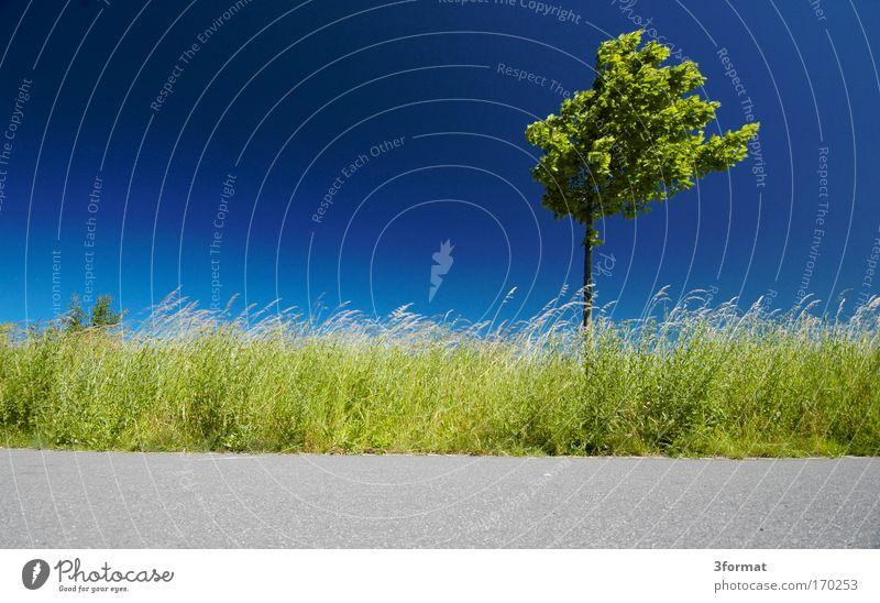 HORIZONT Farbfoto mehrfarbig Außenaufnahme Menschenleer Textfreiraum links Textfreiraum oben Textfreiraum unten Hintergrund neutral Morgen Tag Kontrast