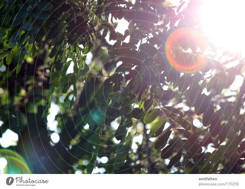 Natürliche Blendenflecke Natur schön Baum Sonne grün Sommer gelb Gefühle Wärme Umwelt natürlich Schönes Wetter positiv strahlend Lichtpunkt Blendenfleck