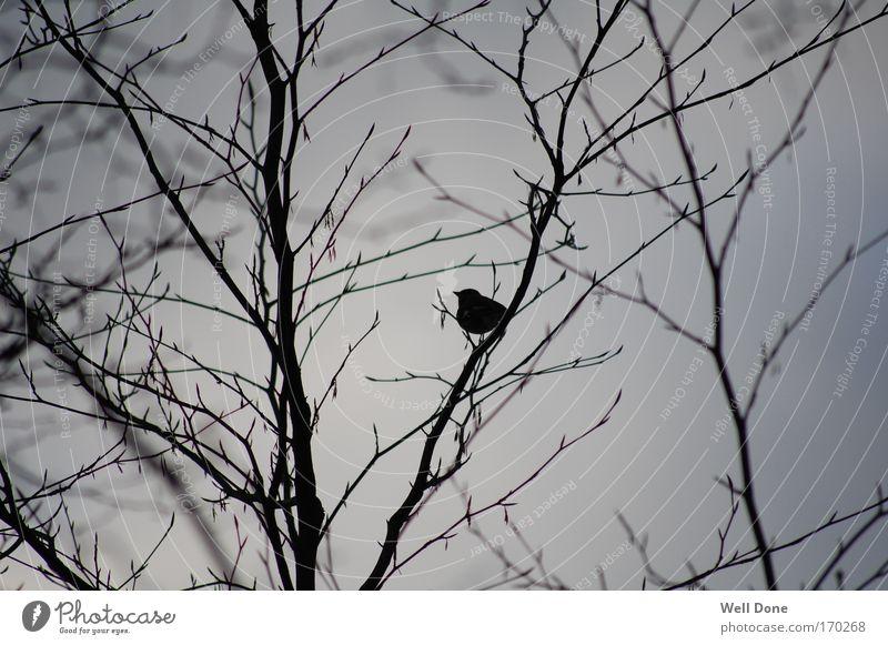 Päuschen im Geäst Natur Baum Winter Tier kalt Vogel Gelassenheit Geäst schlechtes Wetter