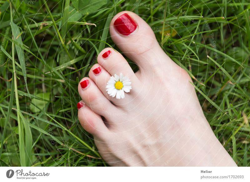 Flower_and_foot-1 Lifestyle Freude Glück Körperpflege Haut Pediküre Gesundheit Leben harmonisch Wohlgefühl Zufriedenheit Erholung Sommer Garten feminin