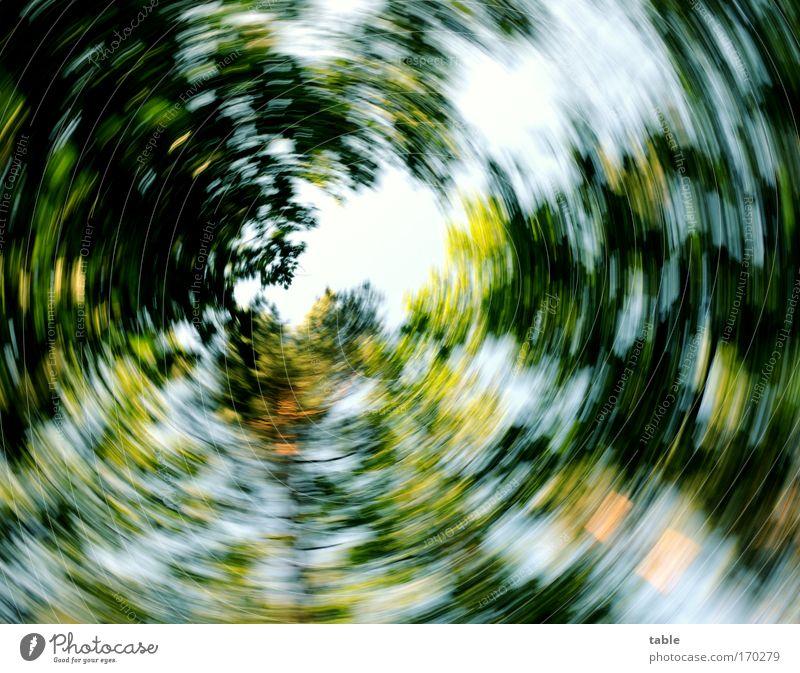 alles dreht sich... Farbfoto Sonnenlicht Unschärfe Bewegungsunschärfe Froschperspektive Weitwinkel Freude Glück Zufriedenheit Erholung Natur Pflanze Himmel