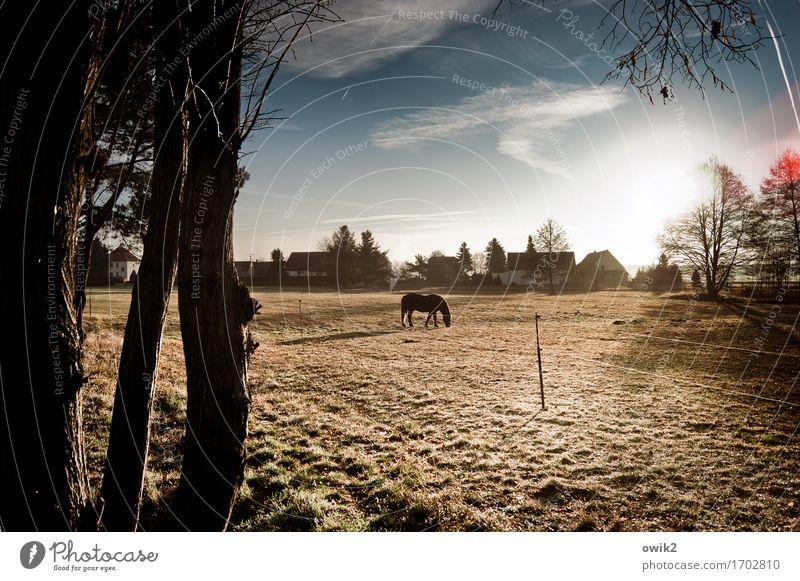 Frühstück genießen Umwelt Natur Landschaft Himmel Wolken Horizont Winter Klima Schönes Wetter Baum Gras Baumstamm Zweig Weide Pferd 1 Tier Erholung Fressen