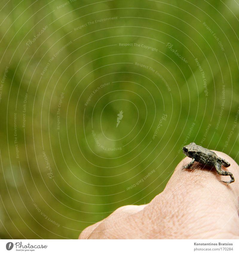 Reinhold Gipfelstürmer Natur Hand grün Ferne Tier Freiheit springen klein hell See Tierjunges Haut warten Beginn Finger frei