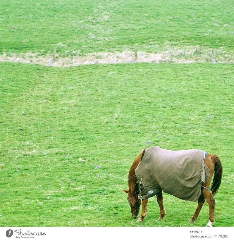 Grasen idyll landscape Pferd Wiederkäuer Idylle Decke rural grassland meadow pastureland Natur Landschaft pflanzlich Landwirtschaft flora Fressen Feld grazing