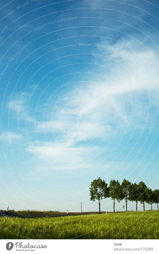 7 auf einen Streich Himmel Natur blau grün Baum Pflanze ruhig Umwelt Landschaft Straße Wiese Gras Wege & Pfade Luft Park Feld