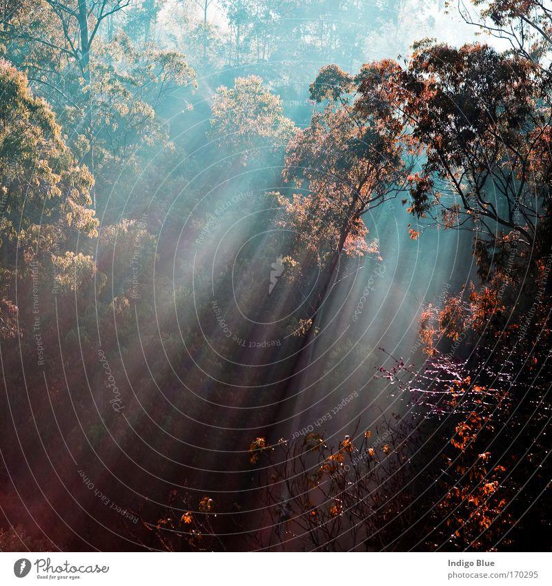 Lichtstrahl Farbfoto mehrfarbig Außenaufnahme Menschenleer Morgen Starke Tiefenschärfe Zentralperspektive Natur Pflanze Sonne Sonnenlicht Herbst Baum Sträucher