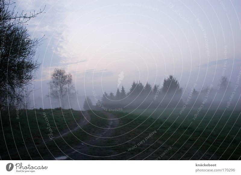 nebulös Farbfoto Außenaufnahme Menschenleer Dämmerung Zentralperspektive Landschaft Wetter Nebel Feld Wald Wege & Pfade Stimmung Natur