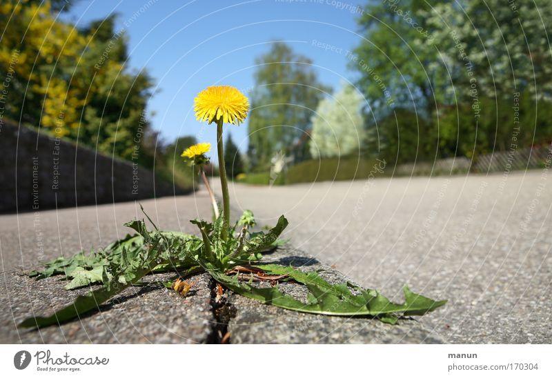 Aufbruch Natur Pflanze Sommer Ferne Straße Leben Frühling Wege & Pfade Kraft Umwelt Erfolg Blume Macht Wachstum authentisch einfach