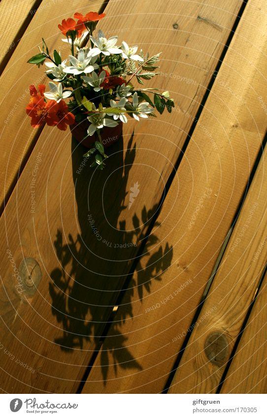 i am speechless but i picked you this bouquet Farbfoto Menschenleer Pflanze Blume Blüte Garten rot weiß Blumenstrauß pflücken schenken Tisch Holz Schatten Sonne