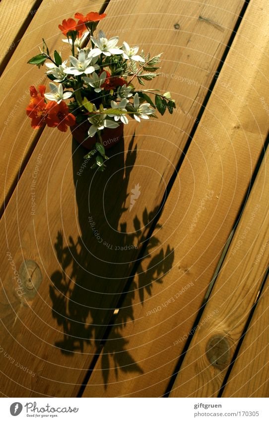 i am speechless but i picked you this bouquet weiß Pflanze rot Sonne Blume Sommer Holz Garten Blüte Frühling Tisch Vergänglichkeit Blumenstrauß Vase Einladung schenken