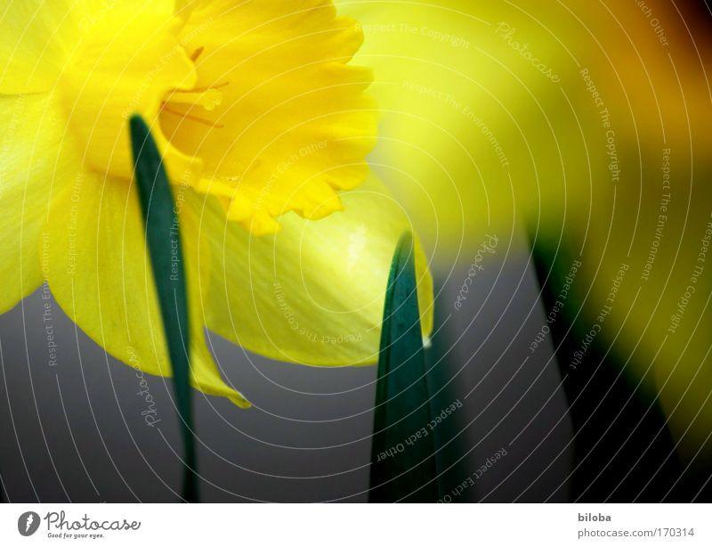 Frühlingserwachen II Farbfoto Außenaufnahme Nahaufnahme Detailaufnahme Menschenleer Textfreiraum rechts Textfreiraum unten Morgen Morgendämmerung Licht Schatten
