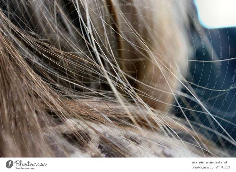 blowin' in the wind Haare & Frisuren feminin Kopf 1 Mensch brünett langhaarig Denken genießen natürlich schön ruhig Leben Haarsträhne braun Farbfoto