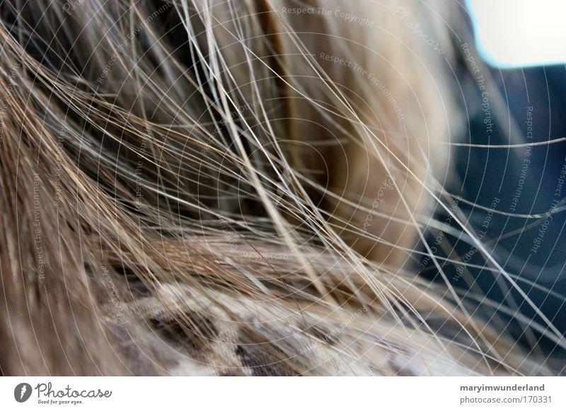 blowin' in the wind Mensch schön ruhig Leben feminin Haare & Frisuren Kopf Denken braun natürlich genießen brünett langhaarig Haarsträhne