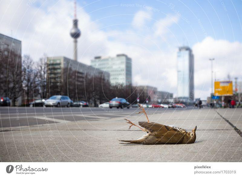 Tote Drossel auf der Karl-Marx-Allee Umwelt Berlin Deutschland Stadt Hauptstadt Stadtzentrum Hochhaus Gebäude Architektur Sehenswürdigkeit Wahrzeichen