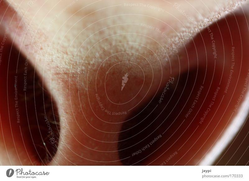 Nasenstupser Farbfoto Nahaufnahme Detailaufnahme Makroaufnahme Experiment abstrakt Schatten Kontrast Schwache Tiefenschärfe Froschperspektive Blick nach oben