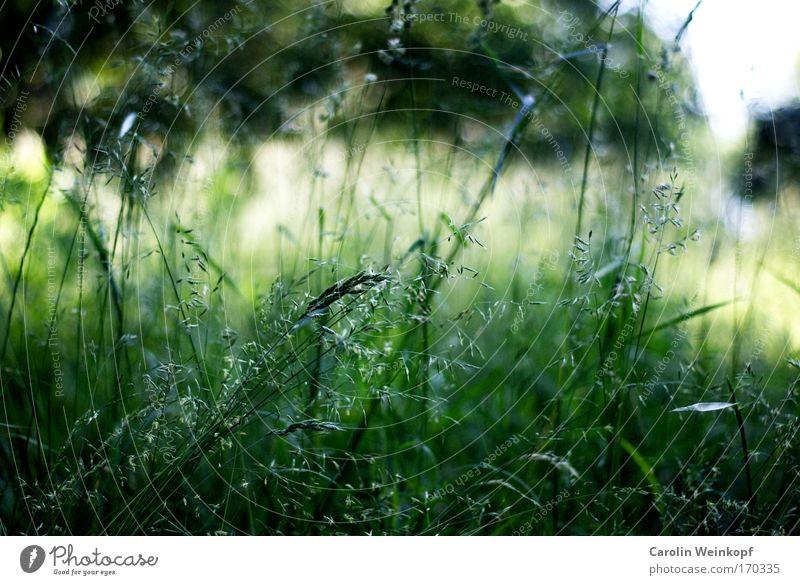Heuschnupfen V. Natur Pflanze Sonne Sommer Umwelt Landschaft Wiese Gefühle Gras Frühling Park Stimmung Wind Feld Sträucher Schönes Wetter