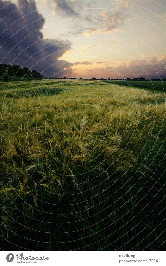 Vor dem Sturm II Natur Himmel Pflanze Sommer Ferne Landschaft Feld Horizont Idylle Gewitter Unwetter Urelemente Schönes Wetter Umweltschutz Gewitterwolken