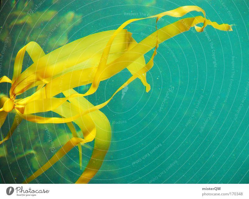 Tangstelle. blau Pflanze Meer gelb Umwelt Leben Wachstum Wellness tauchen Zoo Erdöl Umweltschutz Aquarium Wasser Umweltverschmutzung Futter