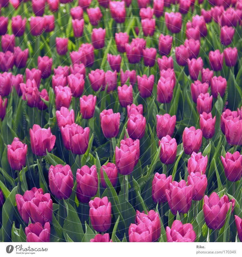 Wohin du auch schaust. Natur Blume Pflanze Sommer ruhig Ferne Farbe Erholung Wiese Blüte Frühling Park rosa Umwelt ästhetisch Wachstum