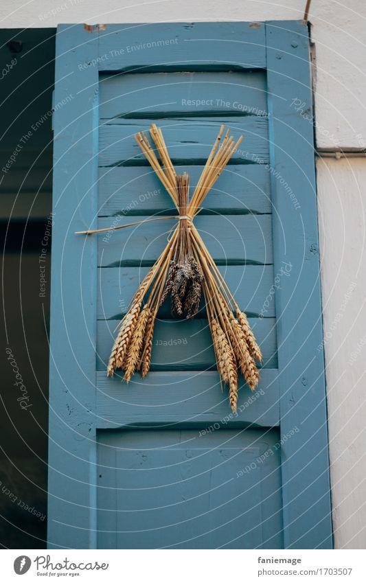 blaue Tür Ferien & Urlaub & Reisen blau Sommer schön weiß Meer Erholung Haus Strand Holz Tür Dekoration & Verzierung Getreide mediterran Schmuck Eingang