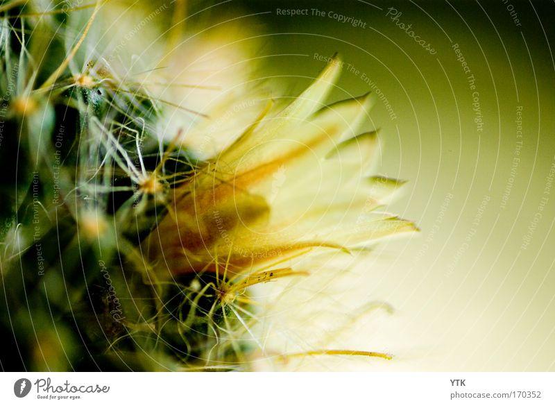 Schönheit findet man überall,man muss nur genau genug hinsehen. Natur schön Pflanze Sommer gelb Farbe Blüte Stimmung ästhetisch Wachstum bedrohlich
