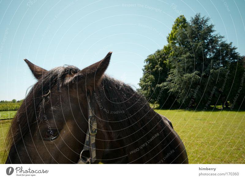 fury cut Natur Himmel Baum Tier Wiese Gras Landschaft Feld Wetter Pferd Neugier Schönes Wetter Interesse Ponys Reiten Sympathie