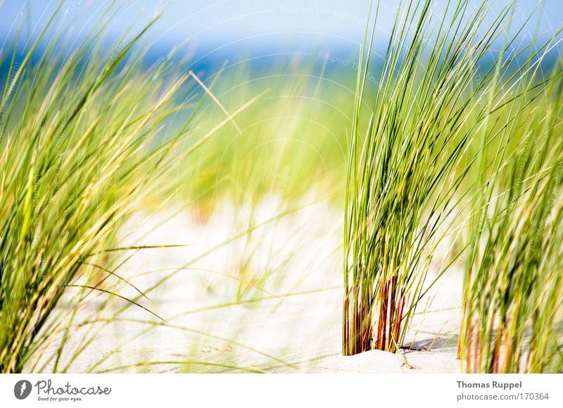 Grün am Meer II Natur Wasser Himmel weiß grün blau Sommer Strand Ferien & Urlaub & Reisen Frühling Wärme Sand Landschaft Zufriedenheit hell