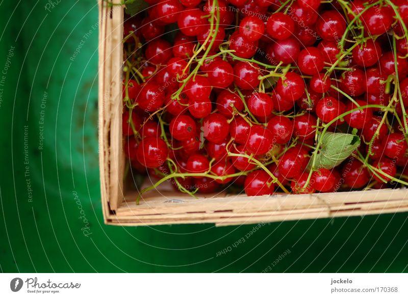 Träuble grün schön rot Lebensmittel Frucht süß Stengel Bioprodukte Anschnitt Bildausschnitt Johannisbeeren Obstkorb