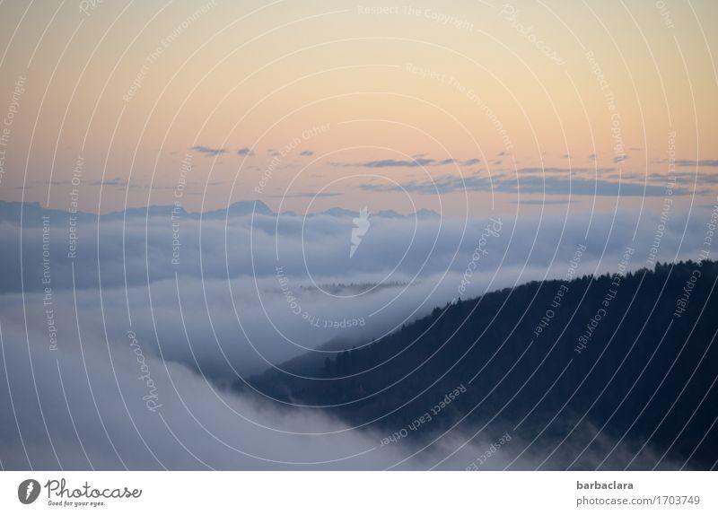 Wolkenmeer Natur Landschaft Urelemente Himmel Sonne Herbst Klima Schönes Wetter Nebel Wald Hügel leuchten Stimmung Ewigkeit Freiheit Horizont