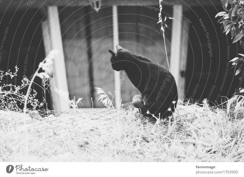 Observation Dorf Haus Mauer Wand hocken Katze Fenster Blick beobachten Natur Gras Jäger Terrasse Suche Morgen ruhig Tier Haustier Maus Halm sitzen