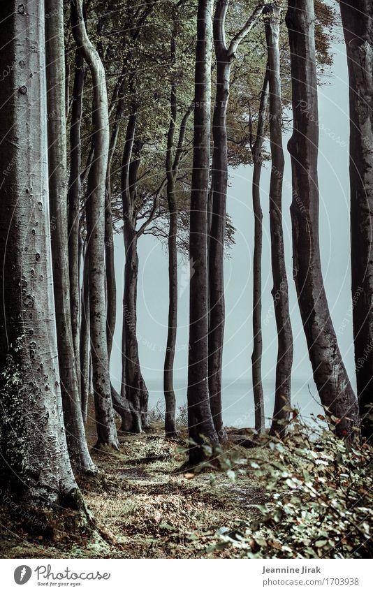 Gespensterwald Natur Ferien & Urlaub & Reisen Pflanze Baum Meer Landschaft Erholung Wald Herbst Tourismus Horizont Nebel wandern Ausflug Sträucher Buch