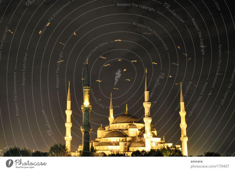 Türkische Glühwürmchen Farbfoto Außenaufnahme Menschenleer Hintergrund neutral Nacht Langzeitbelichtung Bewegungsunschärfe Istanbul Türkei Hafenstadt Altstadt