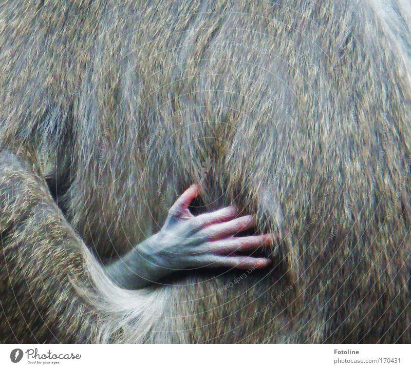 Komm kuscheln! Farbfoto Außenaufnahme Detailaufnahme Textfreiraum rechts Textfreiraum oben Natur Tier Urwald Wildtier Fell Pfote Zoo Tierjunges Tierfamilie