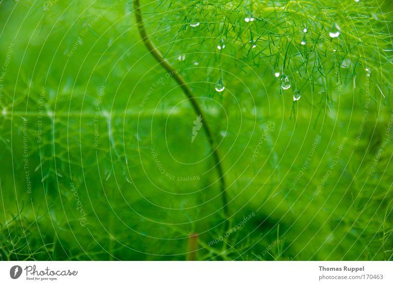 Tropfen Natur Wasser grün Pflanze Regen Nebel Umwelt Wassertropfen nass feucht Grünpflanze