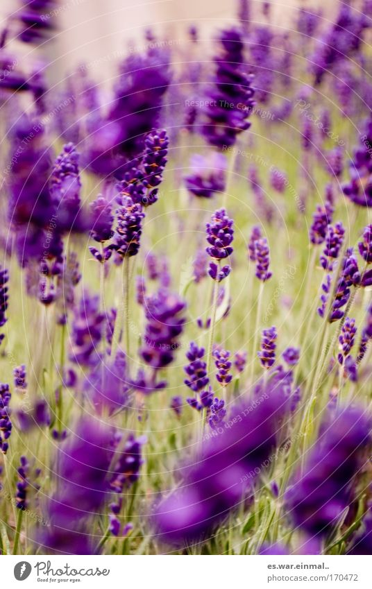 tanzendes violett. Natur Pflanze Sommer ruhig Erholung Umwelt Landschaft Wiese Bewegung Gras Frühling Glück Blüte Park Gesundheit Tanzen