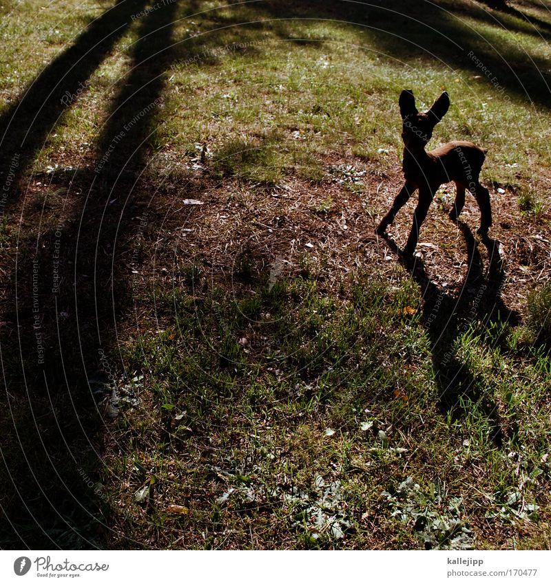 fairytale Farbfoto Gedeckte Farben Tag Schatten Kontrast Silhouette Sonnenstrahlen Ganzkörperaufnahme Tier Wildtier Zoo Streichelzoo 1 Tierjunges klein