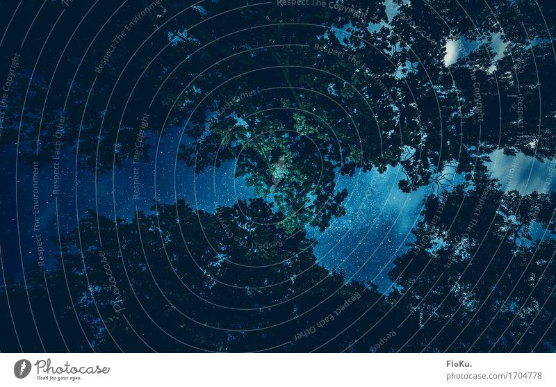 Öfter mal nach oben schauen Himmel Natur blau Sommer Baum Landschaft Blatt Ferne dunkel Wald schwarz Umwelt außergewöhnlich Freiheit Stimmung Luft