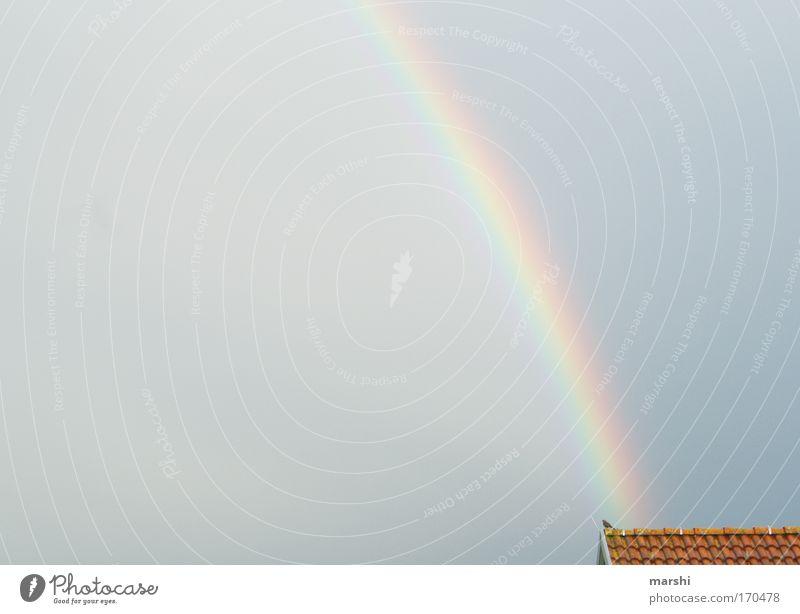 ein kurzer Augenblick... Natur Wasser schön Himmel Sonne Freude Tier Farbe Gefühle grau Regen Luft Stimmung Vogel glänzend Wetter