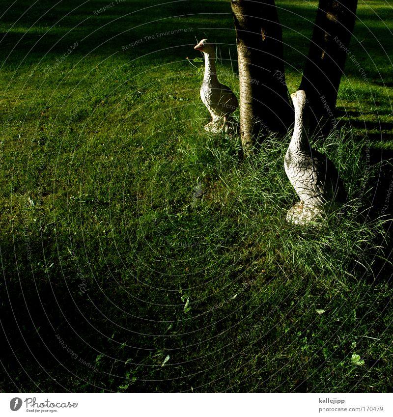 nils und seine freunde Natur Baum Tier Landschaft Umwelt Wiese Gras Garten Freundschaft Vogel Park Dekoration & Verzierung Feder Kommunizieren falsch Gans
