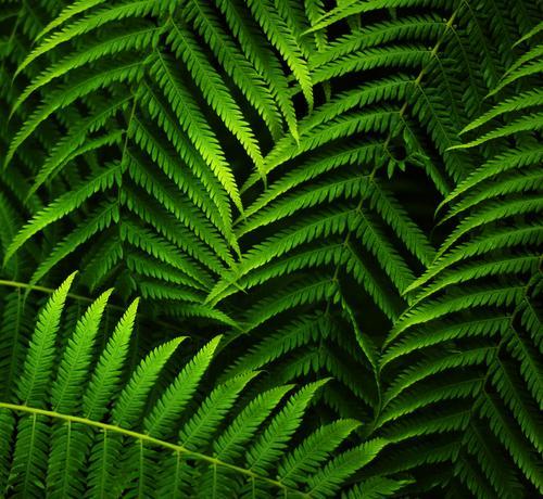 jungle leaves Farbfoto Außenaufnahme Nahaufnahme Detailaufnahme Makroaufnahme Strukturen & Formen Textfreiraum links Textfreiraum rechts Textfreiraum oben