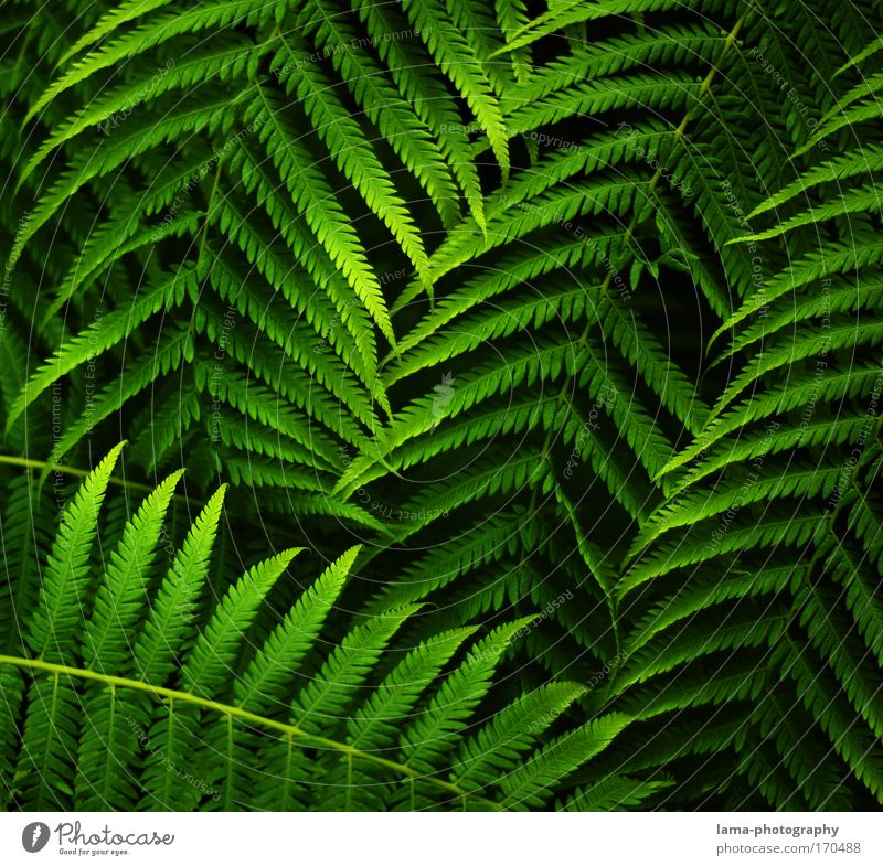 jungle leaves Natur grün Pflanze Blatt ruhig Erholung Hintergrundbild Klima Dekoration & Verzierung Sträucher Urwald Palme exotisch harmonisch Farn filigran