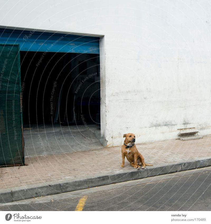 Türsteher Haus Einsamkeit Tier Wand Hund Mauer Gebäude warten sitzen Sicherheit Fabrik bedrohlich Gelassenheit Tor Bauwerk Wachsamkeit