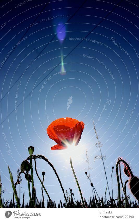Beam me up Farbfoto mehrfarbig Textfreiraum Mitte Tag Reflexion & Spiegelung Lichterscheinung Sonnenlicht Sonnenstrahlen Gegenlicht Umwelt Natur Pflanze Himmel