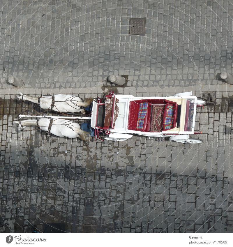 Kutschfahrt Ferien & Urlaub & Reisen Stadt Sommer Erholung Freude Straße Stil Tourismus Zufriedenheit Freizeit & Hobby Ausflug Lebensfreude Schönes Wetter
