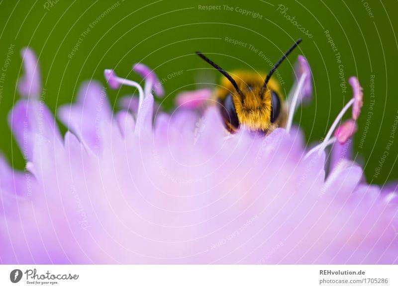 summsumm Natur Pflanze schön grün Blume Tier Umwelt Auge gelb Wiese klein ästhetisch violett Biene Umweltschutz nachhaltig